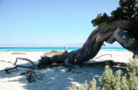 Chrissi island is a small sub tropical island 8 miles south of Ierapetra. Cretan Villa hotel and Akrolithos apartments are just 5 min. walk from the boat terminal τo Chrissi island